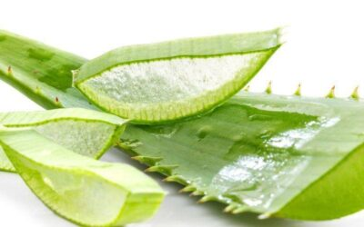 12 amazing health benefits of aloe vera